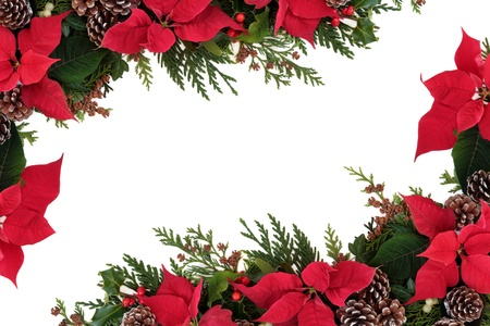 Christmas decorative border of poinsettia flower heads, holly, ivy, mistletoe and cedar leaf sprigs with pine cones over white background  photo