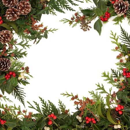 houx: Hiver et Noël frontière traditionnelle de houx, de lierre, le gui et de brins de cèdre feuille de cyprès avec des pommes de pin sur fond blanc Banque d'images