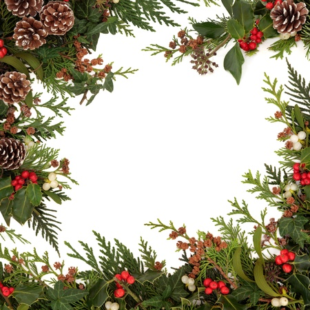 with mistletoe: Winter and christmas  traditional border of holly, ivy, mistletoe and cedar cypress leaf sprigs with pine cones over white background  Stock Photo