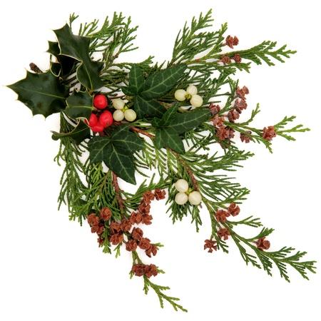 muerdago: Invierno y Navidad flora y fauna con acebo, hiedra, muérdago con racimos de bayas y ramitas de hojas de cedro con conos de pino sobre fondo blanco