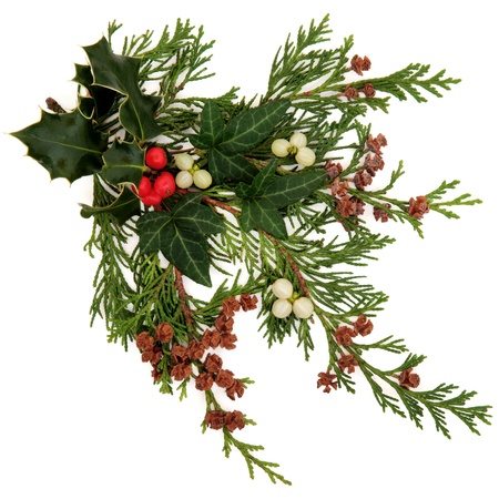 Winter and christmas flora and fauna with holly, ivy, mistletoe with berry clusters and cedar leaf sprigs with pine cones over white background