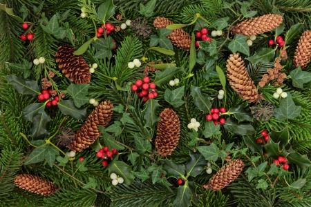 christmas ivy: Winter flora and fauna of holly, mistletoe and ivy leaf sprigs with blue spruce and pine cones forming a background