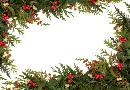 christmas ivy: Christmas traditional border of holly, ivy, mistletoe and cedar cypress leaf sprigs with pine cones over white background  Stock Photo