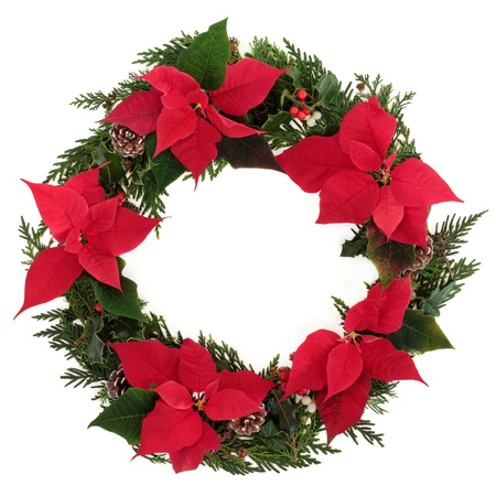 Christmas wreath of poinsettia flower heads with holly, mistletoe, ivy, pine cones and cedar leaf sprigs over white background  photo