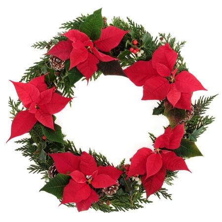 flor de pascua: Corona de Navidad de flor de pascua cabezas de las flores con el acebo, el mu�rdago, hiedra, pi�as de pino y ramitas de cedro hojas sobre fondo blanco