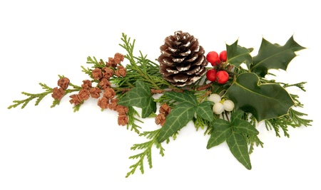 christmas ivy: Winter and christmas flora and fauna of holly, ivy, mistletoe and cedar leaf sprigs with pine cones over white background  Stock Photo