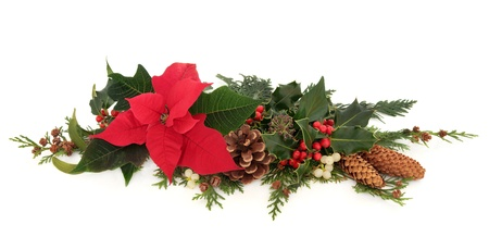 Christmas decorative floral arrangement of a poinsettia flower, holly, mistletoe,  ivy and cedar cypress leaf sprigs with pine cones over white background  photo