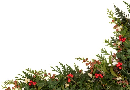 muerdago: Navidad tradicional frontera de acebo, hiedra, mu�rdago y cedro ramitas de hojas de cipr�s con conos de pino sobre fondo blanco Foto de archivo