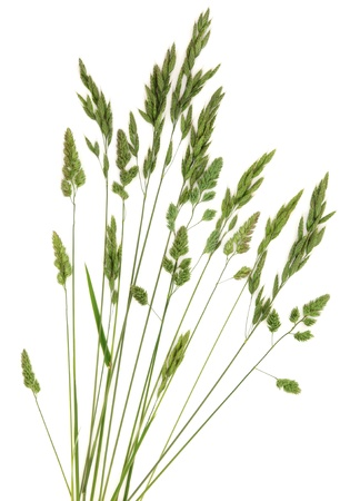 Rye meadow grass in abstract design over white background Stock Photo - 16100801