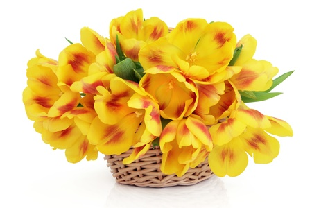 Yellow and red  tulip flowers in a wicker basket over white background  Stock Photo - 16100818
