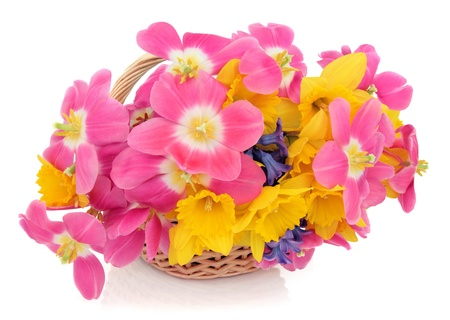 Tulip, daffodil and hyacinth flower arrangement in a wicker basket over white background  Stock Photo - 16100823