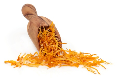 Marigold calendula flower petals in an olive wood scoop over white background