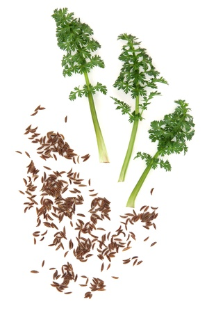 Caraway spice in seed and leaf form over white background  Stock Photo - 16244188