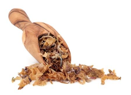 alga marina: Musgo irlandés súper alimento en una cuchara de madera de olivo sobre fondo blanco usado como una medicina alternativa y también como un amuleto de buena suerte