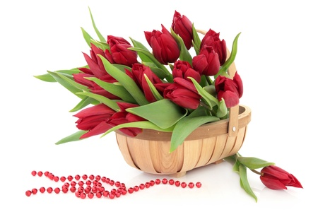 Red tulip flower arrangement in a rustic wooden basket with bead chain over white background  Stock Photo - 16383860