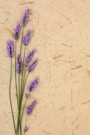Lavender herb flower arrangement over mottled cream paper background Stock Photo - 17420743
