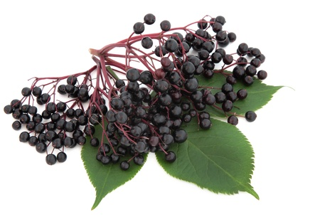 Elderberry fruit with leaf sprigs over white background  Stock Photo - 17420710