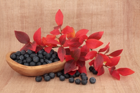 Blueberry fruit still life in a rustic olive wood bowl with red leaf sprigs over papyrus background Stock Photo - 17420754