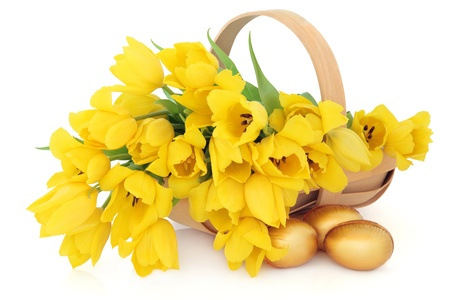 Yellow tulip flower arrangement in an easter basket with golden chocolate eggs over white background  photo