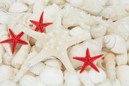 Seashell selection featuring white and red starfish forming a background  Stock Photo - 17588053