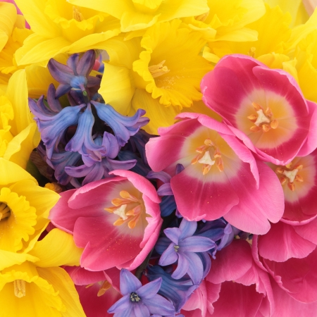 Tulip, daffodil and hyacinth flower arrangement forming a background Stock Photo - 17588047