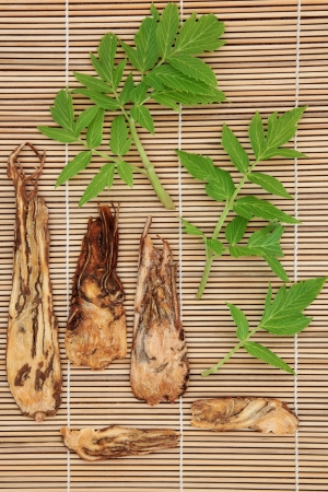 Angelica herb root and leaf sprigs over bamboo background  Stock Photo - 17699508