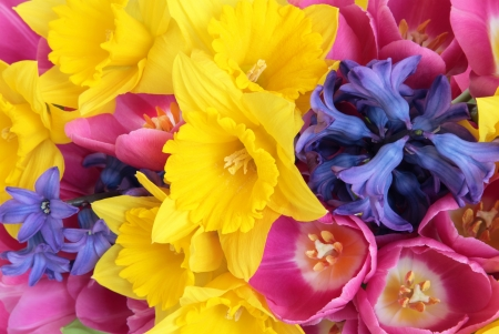 Daffodil, hyacinth and tulip spring flower display forming a background  Selective focus Stock Photo - 17699500