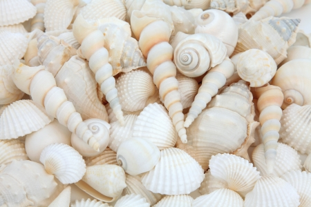 White sea shell selection forming an abstract background  Stock Photo - 17817733