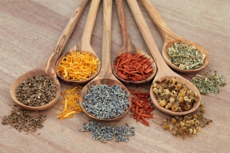 homeopathic: Naturopathic healing herb selection in olive wood spoons over papyrus background