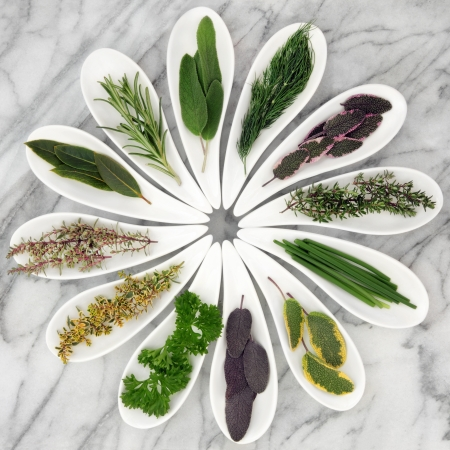 Fresh herb selection in white porcelain leaf shaped bowls over marble background Stock Photo - 17817730