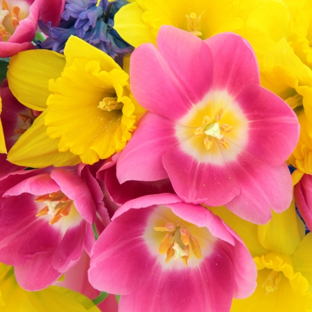 Tulip, daffodil and hyacinth flower arrangement forming a background  Selective focus Stock Photo - 17817722