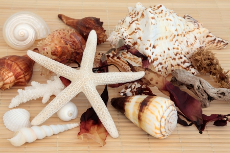 driftwood: Sea shell and seaweed selection with driftwood over bamboo background  Stock Photo