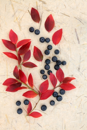 Blueberry fruit with leaf sprigs over cream mottled background  Stock Photo - 18032500