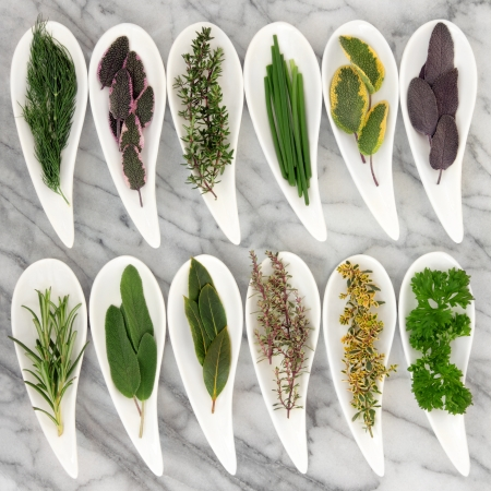 cebollin: Hierba de la selección de variedades de tomillo, salvia, romero, hinojo, menta, cebollino, perejil y ramitas de laurel en cuencos forma de las hojas blancas sobre fondo de mármol