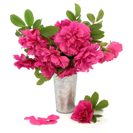 Rugosa rose flower arrangement in an aluminium vase over white background Stock Photo - 18571115