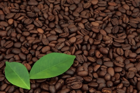 Coffee beans with leaf sprigs forming a background  Stock Photo - 18867205