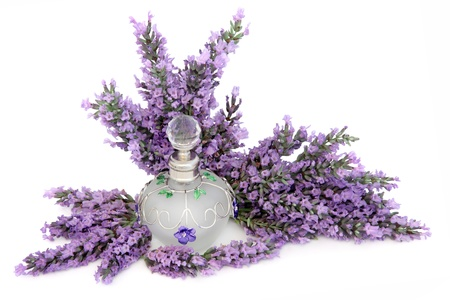Lavender herb flower sprigs and decorative perfume bottle over white background  Stock Photo - 19021604