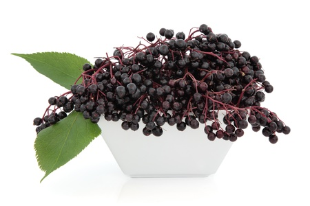 Elderberry fruit in a porcelain dish with leaf sprigs over white background  Stock Photo - 19136246