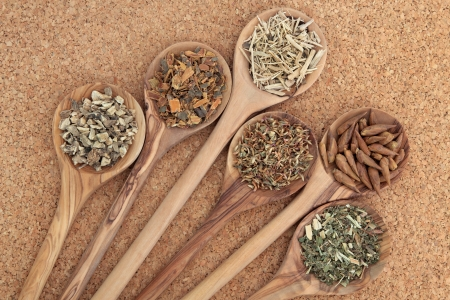alternative health: Herb selection for alternative health remedies in olive wood spoons over cork background  Elecampagne, buckthorn, ginseng, red clover, balm of gilead and meadowsweet, left to right  Stock Photo