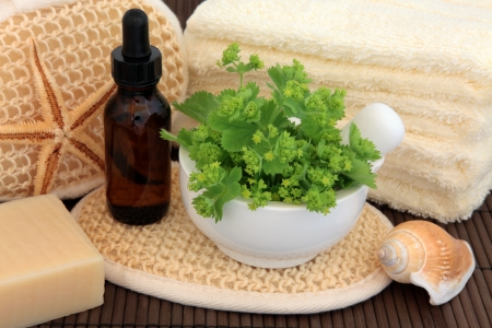 alchemilla: Ladies mantle herb leaf sprigs with aromatherapy essential oil bottle and spa accessories  Alchemilla