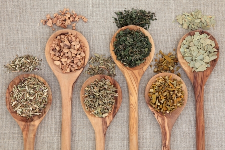 damiana: Herb selection for alternative health remedies in olive wood spoons over beige textured background