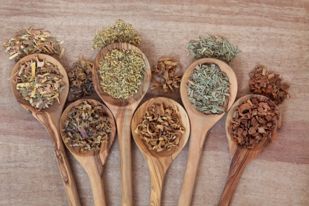 alternative health: Herb selection for alternative health remedies in olive wood spoons over papyrus background  White willow, irish moss, yarrow, orange blossom, lemon grass and oak bark, left to right