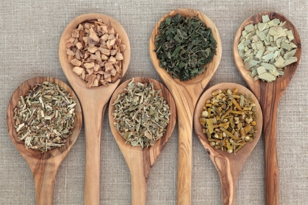 damiana: Herb selection for alternative medicine in olive wood spoons over beige background, hyssop, galangal root, damiana, nettle, mistletoe and eucalyptus, left to right  Stock Photo
