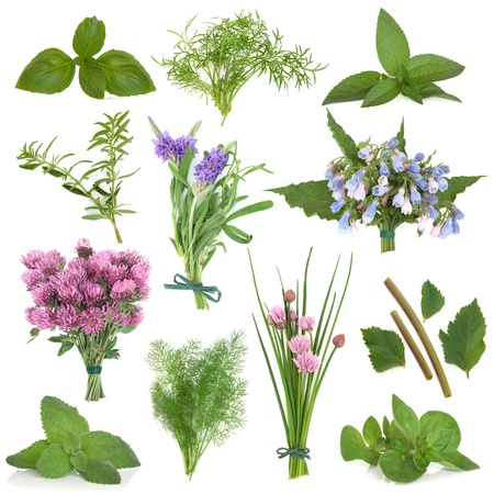 Large herb leaf and flower selection used for culinary and medicinal purposes over white background  Stock Photo