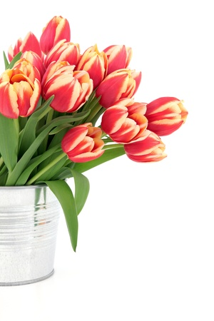 tulips in vase: Red and yellow tulip flower arrangement in a metal vase over white background