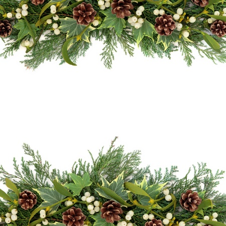 Christmas floral background border with mistletoe, ivy, pine cones and winter greenery over white