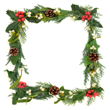 christmas ivy: Christmas floral border with holly, mistletoe, ivy, conifer leaf sprigs and pine cones over white background