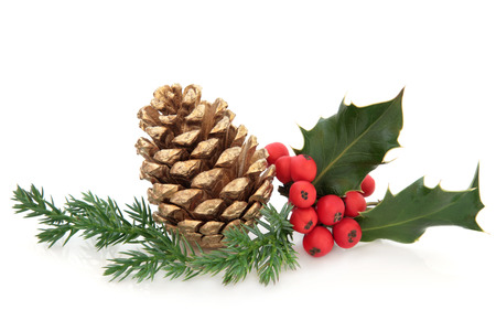 pine  fruit: Holly berry leaf sprig with gold pine cone and fir over white background