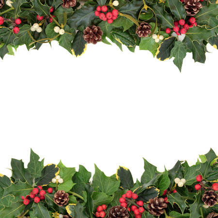 Christmas floral background border with holly, ivy, mistletoe, pine cones and winter greenery over white background