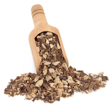 herbology: Angelica herb root used in chinese herbal medicine in a wooden scoop over white background  Dong quai